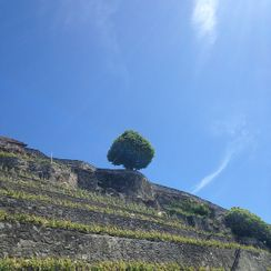 Lavaux vineyard excursions